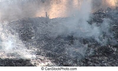 Garbage dumping and burning.