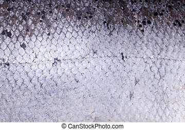 Atlantic salmon scales