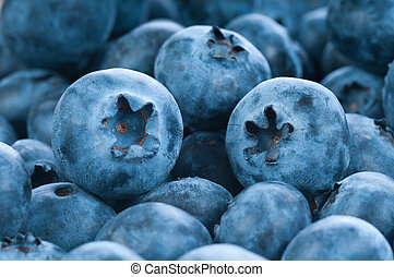 Fresh blue berries group as background, seasonal fruit.