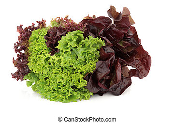 Lettuce Variety - Lettuce variety of lollo rossa, red and...