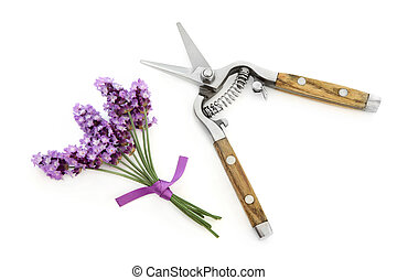 Lavender Herb Flowers and Secateurs - Lavender herb flower...