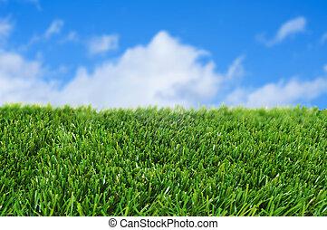 grass and the sky - closeup of grass over the blue sky