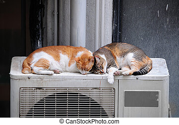 Two Cats Sleeping Outdoors - Lazy cat couple asleep outdoors...