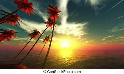 palm trees and horizon