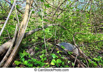 Blandings Turtle Resting on Land