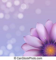Lilac Gerber With Bokeh