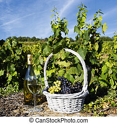 white wine spirit - glass, bottle of white wine and grappes...