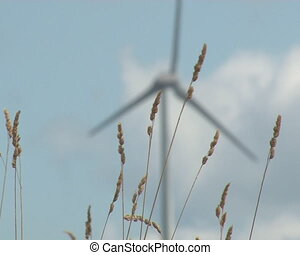 windmill spin sedge sway - Meadow sedge sway in wind and...