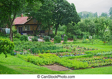 Kitchen garden - Vegetable garden near an old country...