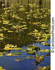 Lily Pads on Nymph Lake