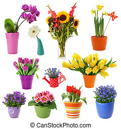 Flowers - Flower collection isolated on white background