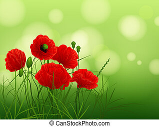 red poppies - background with poppies and grass
