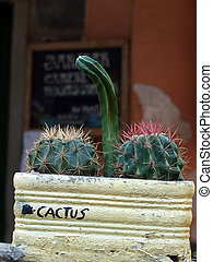 The composition of cacti - frivolous joke gardener