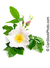 Nice flowers - An image of fresh pink flowers of briar