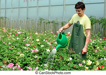 Gardener - An image of a young gardener in a greenhouse