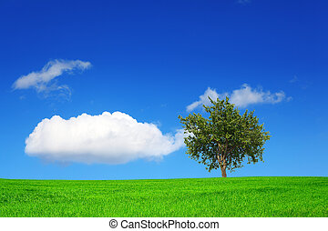 Green field and tree on blue sky