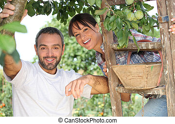 couple picking fruit