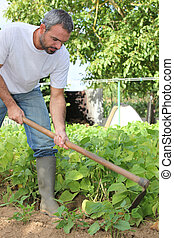 hombre, jardinería