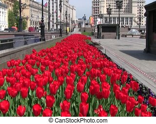 Red Roses in the Kremlin - Red roses in the Kremlin, Moscow