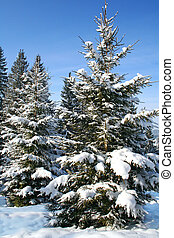1 tree a fir-tree is in-field covered by white snow3jpg - a...
