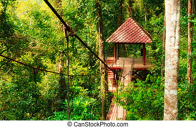 Canopy Way - canopy way in botanical garden at Trang,...