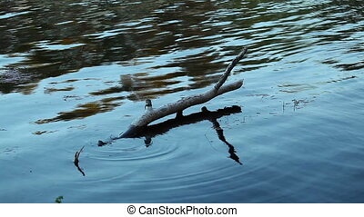 Snag in the Water - snag in the water at day