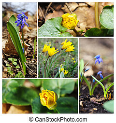 Spring flowers Concept of new life Collage