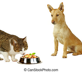 Cat?s only, a cat is eating a delicious meal while a dog is...