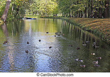 water landscape - Water landscape with ducks, fall