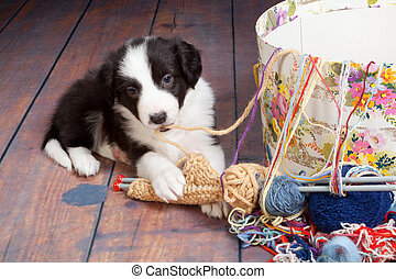 Tangled puppy - Funny doggy playing with woold and knit work