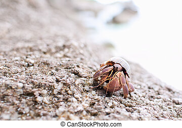 Hermit Crab Walking Along The Beach