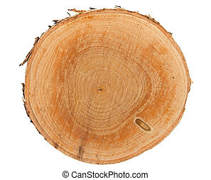 Tree stump top view - Cross section of tree stump isolated...