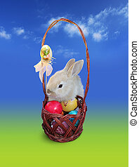 Easter bunny with eggs basket, sky - Easter rabbit with eggs...