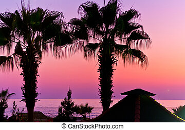 Pink sunset and palmtrees