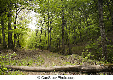 Forest track - Fallen wooden trunk blocking the dirt road in...