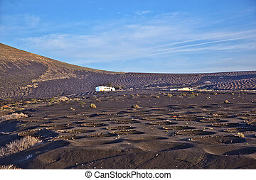 Landscape La Geria in Lanzarote, a Wine area on volcanic ashh