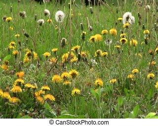 Fields on sunflowers in Kiev