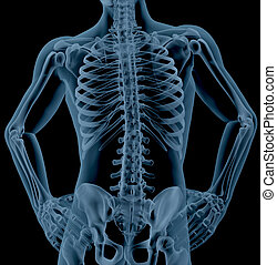 Male skeleton - 3D render of a close up of a male skeleton...