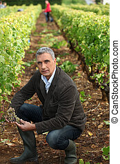 Farmer kneeling in vineyard