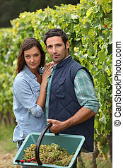 Couple picking grapes