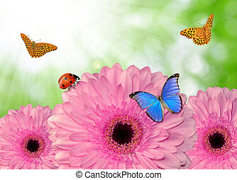 pink gerberas with butterflies on green natural background