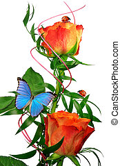 orange rose with butterfly and ladybugs isolated on white...