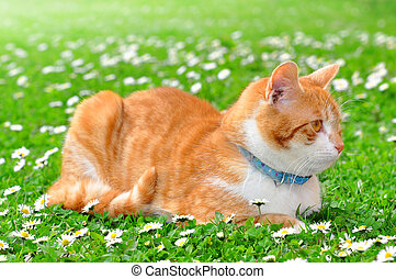 young cat - cat in the grass