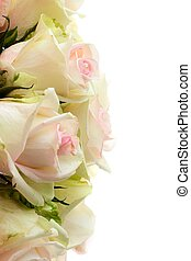 Roses on a white background. Isolated flowers