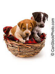 Puppys in a birds nest. - Two cute puppies in a small bird...