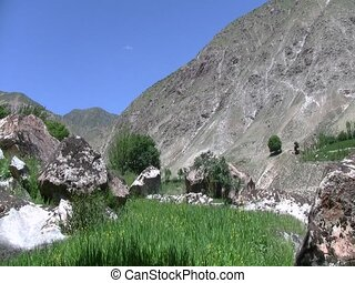 Crops growing in Afghanistan - Food crops growing in...
