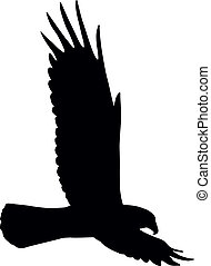 Flying eagle   - Silhouette of flying eagle