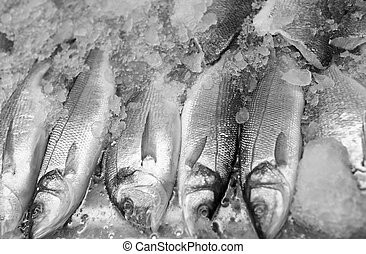 Fresh sea fish on ice - Fresh fish on ice decorated for sale...