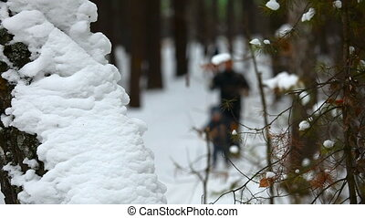 Winter forest. - Cross-country skiing in winter forest....