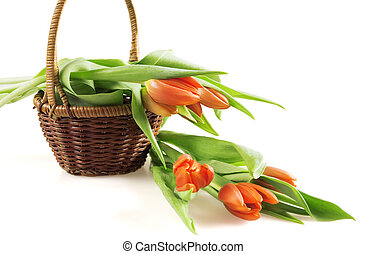 red tulips in a basket on white background